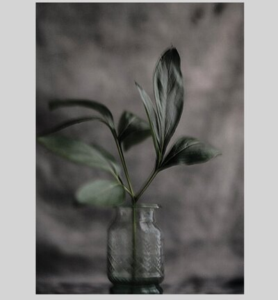 0 Green Leaf