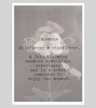 0 Anemone