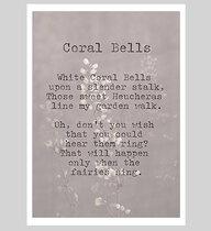 0 Coral Bells