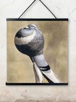 0 Poster Pigeon 50X50